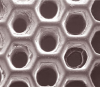 Scanning electron microscope image of scaffold